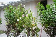 Représentant des Flora-fleurs de gens du pays s'élevant dans le jardin images stock