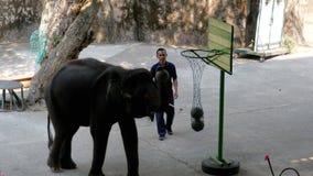 Représentation des éléphants sur l'exposition d'éléphant thailand banque de vidéos