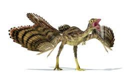 Représentation Photorealistic d'un dinosaure d'archéoptéryx.