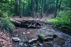 Represa pequena no córrego criado pelo castor na floresta úmida Vina Imagens de Stock