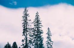 Representación de la foto bosque místico Escena espeluznante de niebla Silhou de los árboles imagen de archivo