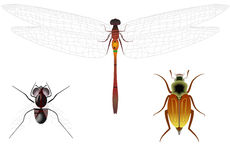 Representatives of insects Stock Images