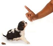 Reprimenda do cão Fotos de Stock Royalty Free