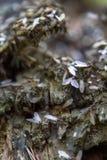 reproductie van mieren royalty-vrije stock afbeelding