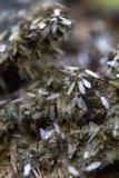 reproduction des fourmis Image libre de droits