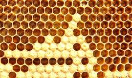 Reproduction Of Bees Royalty Free Stock Image