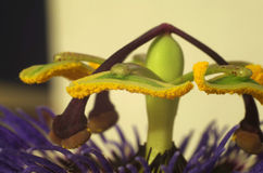 Reproductive System in Flowering Plants Royalty Free Stock Photo