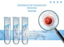 Sperm Cells Swim To The Egg Stock Illustration ...