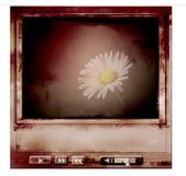 Reproductor multimedia sucio del Web Fotografía de archivo libre de regalías