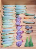 Reproduktion av suckulenter vid sidor royaltyfria foton