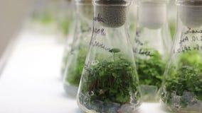 Reproduktion av växter arkivfilmer