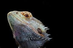 Reptiel Stock Foto