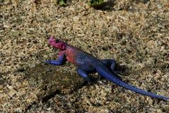 Reptiel stock afbeelding