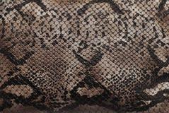 Reptiel huidtextuur royalty-vrije stock foto's
