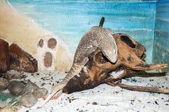 Reptiel in een glastank royalty-vrije stock afbeeldingen