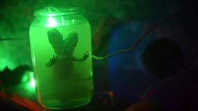 Reptiel in een kruik met groene vloeistof stock footage