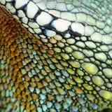 Reptiel huid Royalty-vrije Stock Foto