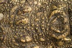 Reptiel huid, leerachtergrond Stock Afbeelding