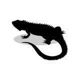 Reptiel zwart het silhouetdier van de leguaanhagedis vector illustratie