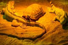 Reptielen in een terrarium Royalty-vrije Stock Afbeelding
