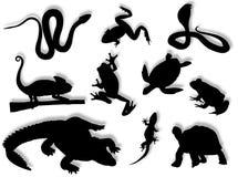 Reptielen en amfibieen Royalty-vrije Stock Afbeeldingen