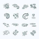 Reptielen en amfibieen geplaatste pictogrammen Het Ontwerp van de lijn vector illustratie