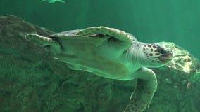 Reptielen en Zeeschildpadden Royalty-vrije Stock Fotografie