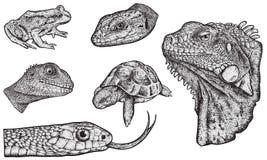 Reptielen - Getrokken Hand vector illustratie