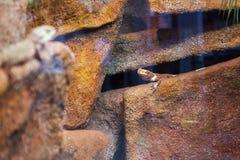 Reptielen op rotsen Stock Foto