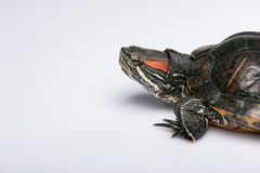 Reptielen op witte achtergrond Royalty-vrije Stock Foto