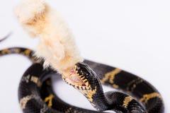 Reptielen op witte achtergrond Royalty-vrije Stock Afbeeldingen
