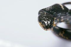 Reptielen op witte achtergrond Stock Foto's