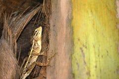 Reptielen van Sri Lanka royalty-vrije stock foto
