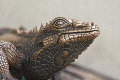 Reptielstandbeeld Stock Foto's