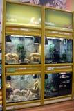 Reptielvertoningstanks in een huisdierenopslag Royalty-vrije Stock Foto