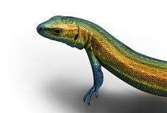 reptil Arkivbild