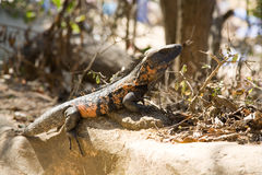 Reptil Stockfoto