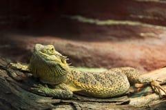 reptil Lizenzfreies Stockbild
