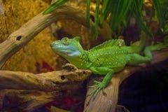reptil Imagen de archivo libre de regalías