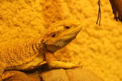 reptil Lizenzfreies Stockfoto