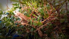 reptil Royaltyfri Fotografi