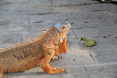 Reptil, año 2015 foto de archivo