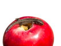 Reptil auf Apple Stockfoto