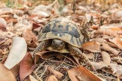 Reptil de Turtel de la tortuga Imagen de archivo libre de regalías