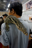 Reptil fans. The reptile fans gathered in an exhibition in the shopping center in Karanganyar, Central Java, Indonesia Stock Photography