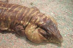 Reptil grande Fotografía de archivo libre de regalías