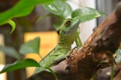 Reptil i zoo Fotografering för Bildbyråer
