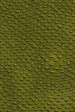 Reptil skin. Abstract background of a reptil skin Stock Photography