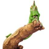 Reptil verde en el fondo blanco fotos de archivo