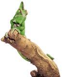 Reptil verde en el fondo blanco imagen de archivo libre de regalías
